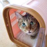 猫のキャリーを選ぶ四つのポイント