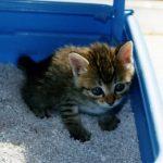 猫を飼うならトイレ環境に気を配ろう