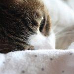 犬や猫は風邪を引く?