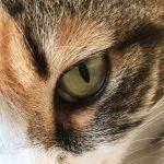 犬や猫の涙やけが気になる場合の対処法