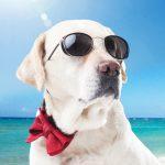 真夏・真冬は気を付けよう。犬の体感温度