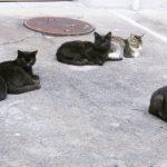 猫の集会の秘密
